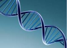 El ADN en el escenario computacional